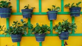 Plant pots neatly arranged on the wall. stock photos