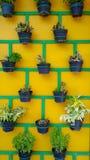 Plant pots neatly arranged on the wall. royalty free stock photos