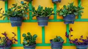 Plant pots neatly arranged on the wall. royalty free stock photography