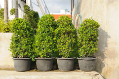 Plant-pots placed in the foot path. Royalty Free Stock Photos