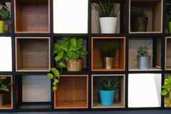 Plant pots placed on the wooden shelf attached to the wall royalty free stock photography