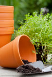 Plant pots Royalty Free Stock Images