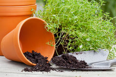 Plant pots Royalty Free Stock Image