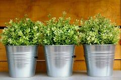 Plant pots Stock Photography