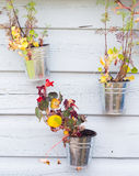 Plant pots on wooden background Stock Image