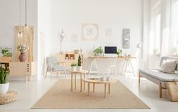 Plant on pouf neat wooden tables on brown carpet in spacious white flat interior with sofa. Real photo. Plant on pouf near wooden tables on brown carpet in stock photo