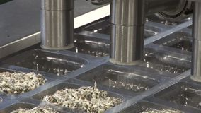 Plant for processing of fish products. Automatic packing salad stock footage