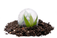 Plant Protection Royalty Free Stock Photography