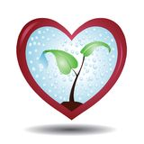 Plant in a protective love shaped glass Royalty Free Stock Photos