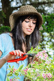 Plant pruning Royalty Free Stock Images