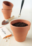 Plant the pumpkin seeds in ceramic pot Stock Images