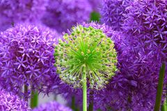 Plant, Purple, Flower, Flora stock photography