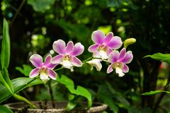 Plant Purple Orchid royalty free stock image
