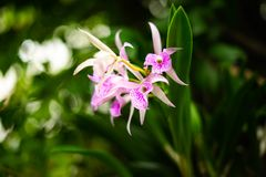Plant Purple Orchid with blur backgroud royalty free stock images