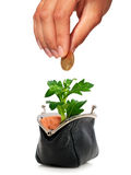 Plant and purse. Stock Images