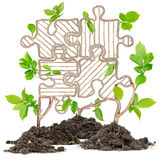 Plant puzzle Royalty Free Stock Photo