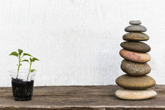 The plant pyramid from sea stones. The plant pyramid from sea stones Royalty Free Stock Photo