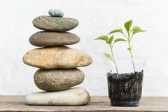 The plant pyramid from sea stones. Small seedlings and a pyramid of sea stones Stock Photo