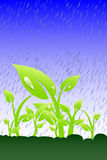 Plant in the rain Royalty Free Stock Photo