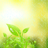 Plant in the rain Royalty Free Stock Photos