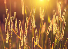 Plant in the rays of the setting sun. Royalty Free Stock Image