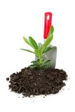 Plant Ready Stock Image