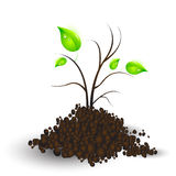Plant recreating Royalty Free Stock Photography