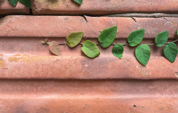 Plant on red brick. Alive green plant growing on the red brick Stock Photos