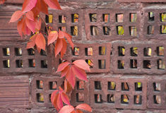 Plant with red leaves on stone wall Royalty Free Stock Photography