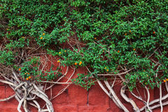 Plant on a red wall Royalty Free Stock Image