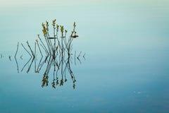 Plant reflection Royalty Free Stock Image