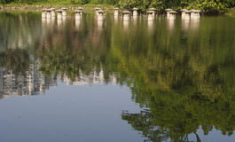 Plant reflection in the water Royalty Free Stock Photos