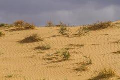 Sahara spring Stock Image