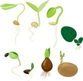 Plant reproduction set. On white background Stock Photos