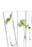 Plant research Royalty Free Stock Photos