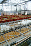 Plant research Stock Image