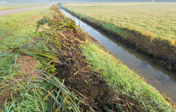 Plant residues on the bank of the ditch Stock Image