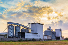 Plant Rice mill Royalty Free Stock Image
