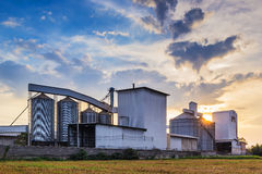 Plant Rice mill. Landscape shot rice mill with sunset background stock images