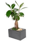 Plant right Stock Images