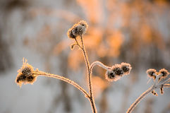 Plant in the rime royalty free stock photos