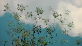 Plant and River Water. Video stock video footage