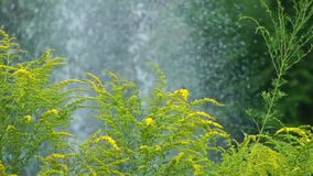 Plant and River Water. Video stock footage