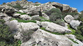Plant in a rock cavity, spring Cyprus Stock Photos