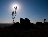 Plant and rock silhouette Stock Photo