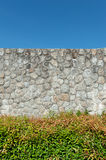 Plant and rock wall. With clear sky Stock Photo
