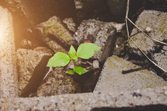 Plant on the rocks Stock Images