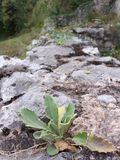 Plant on rocks. Plant growing on the rock wall Royalty Free Stock Image