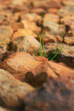 Plant in the rocks Royalty Free Stock Images