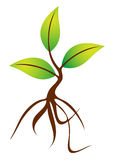 Plant with roots royalty free illustration